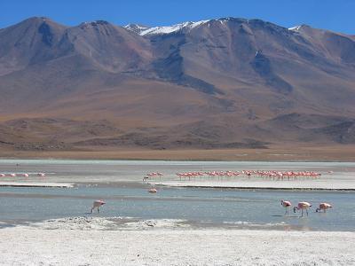 BOL-uyuni-flamingos