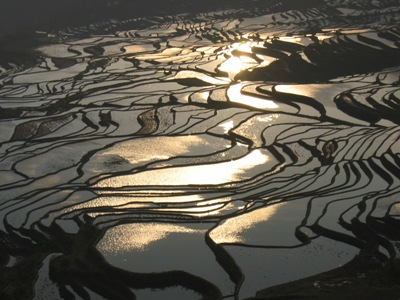 CHINA-sonnenaufgang-reisfeld